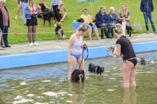 Honden zwemmen KP Zijlbad_0554